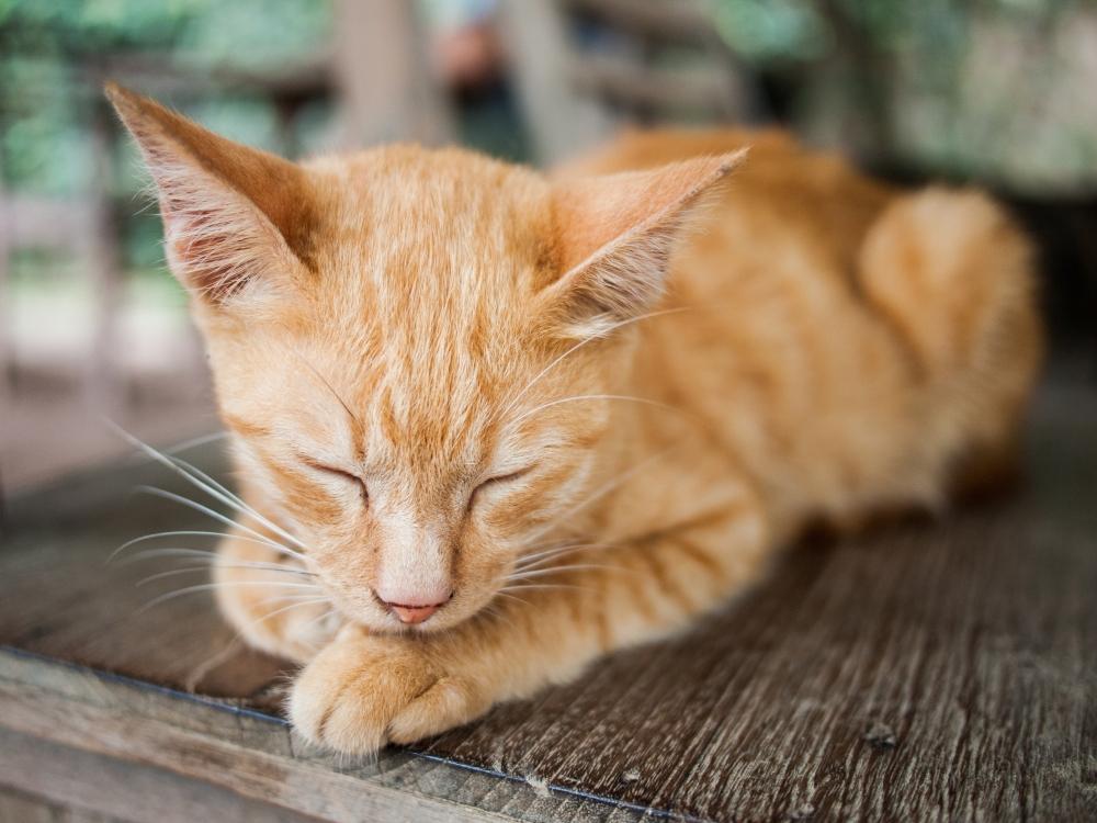 Riverside Cats Galore, Meow! (5/6)