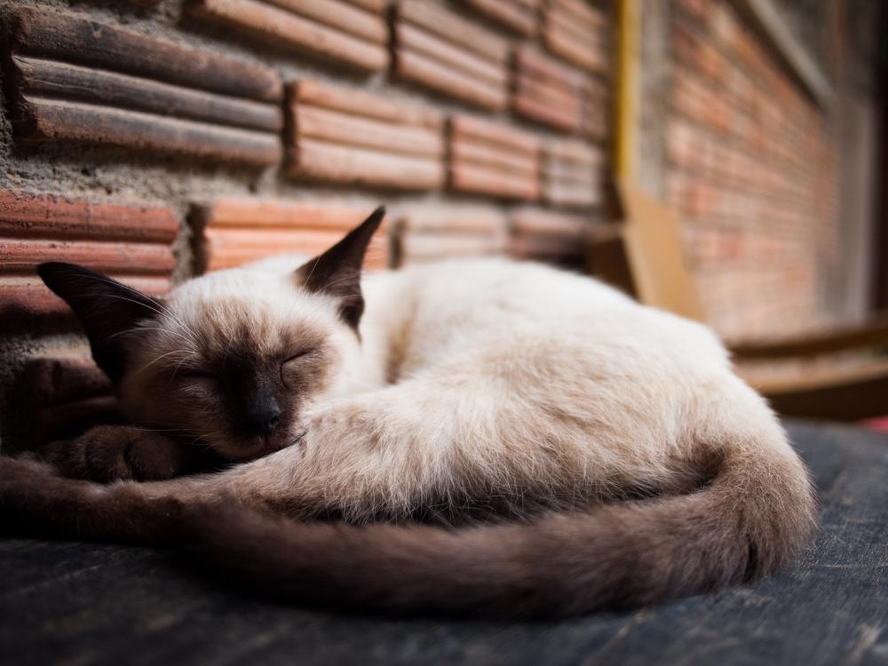 Riverside Cats Galore, Meow! (1/6)