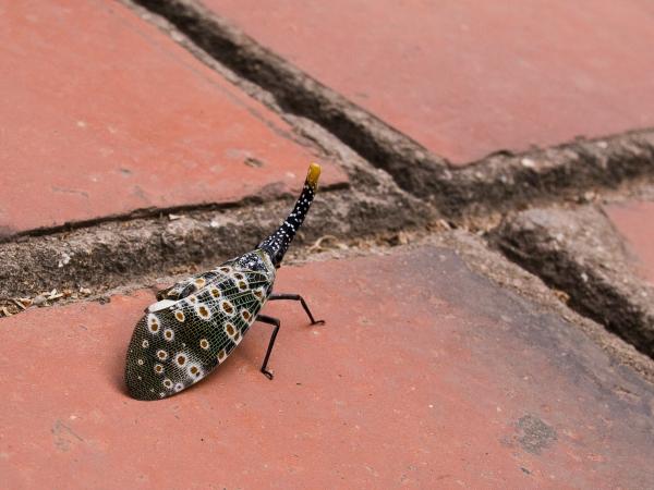 Strange, Headless Bug