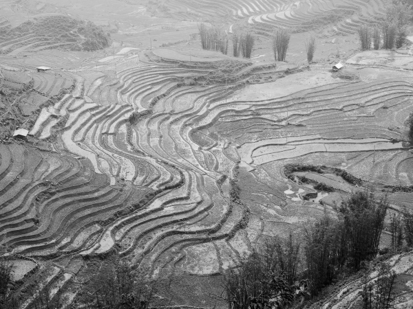Rice Terraces at Sapa